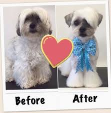 Dog Grooming Styles Haircuts