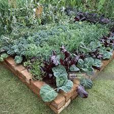 formal vegetable garden with brick edging ruby swiss chard cabbage