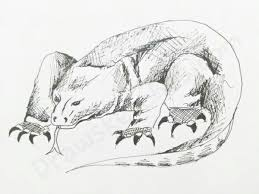 how to draw a komodo dragon in a few easy steps with pictures