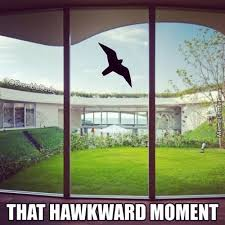 Hawkward Meme - hawkward memes best collection of funny hawkward pictures