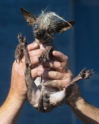 ugliest look at these ugly dogs from the world u0027s ugliest dog contest