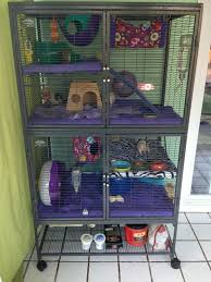 Best Bedding For Rats 67 Best Ratties Images On Pinterest Pet Rats Diy Rat Toys And