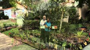 miami shores residents cited for front yard vegetable garden youtube