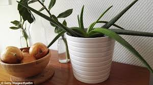 10 Best Houseplants To De by The Plants That Nasa Says You Need In Your Bedroom Daily Mail Online
