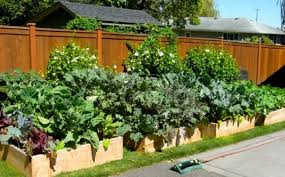 vegetable garden home and garden