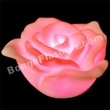 mardi gras roses mardi gras flowers bongo