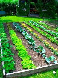 free vegetable garden planner by zip code the garden inspirations