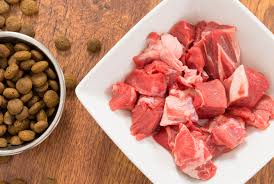 proteins in raw food diets for dogs petmd