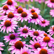 flowers that do well in shade 9 best flowers for garden design