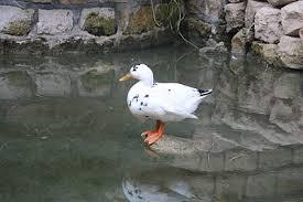 Underground Duck Blind Df2014 Duck Dwarf Fortress Wiki