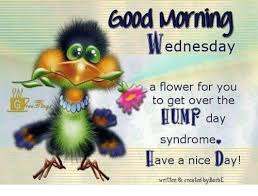 Wednesday Hump Day Meme - good wednesday a flower for you to get over the hump day syndrome
