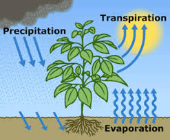 water cycle facts for