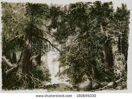 forest sketch stock images royalty free images u0026 vectors