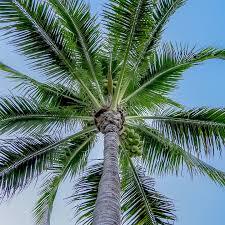 free photo florida tropical tree miami palm palm tree summer max