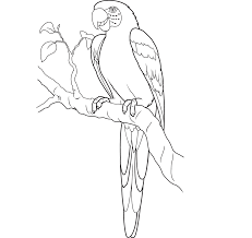 parrot drawing shimosoku biz