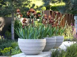 Outdoor Container Gardening Ideas Pots For Container Gardening And Creative Container Gardening