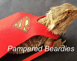 bearded dragon costume etsy