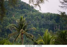 Jungle Backdrop Landscape Hill Backdrop Jungle Stock Photos U0026 Landscape Hill