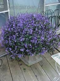 Types Of Planting Flowers - best 25 types of lavender plants ideas on pinterest lavender