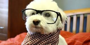 Hipster Dog Meme - list of synonyms and antonyms of the word hipster puppy