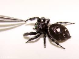 halloween spiders 6legs2many