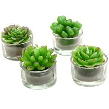 gift guide gifts for succulent lovers juicykits com