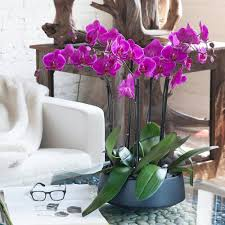 pink orchids orchid arrangement grandioso black with pink orchids orchid