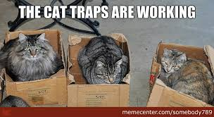 Cat Trap Meme - should i trap neighbors cats page 3 off topic discussion forum