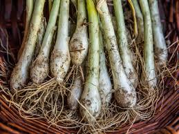 freezing green onions hgtv
