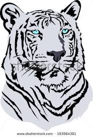white bengal tiger vector stock vector 193984361