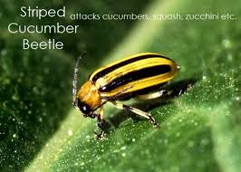 how to get rid of common garden pests the art of doing stuff