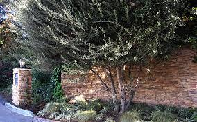Drought Tolerant Backyard Ideas Eco Landscape Design Build Maintain Drought Tolerant Los