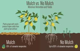 mulch much the benefits of gardening with mulch fix com