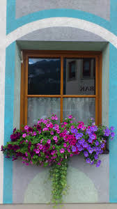 Beautiful Window Boxes Beautiful Arrangement For A Wooden Window Box Love The Colors