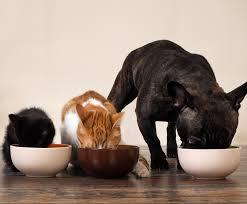 cuisine à crocs cuisine à crocs clinique vétérinaire du regain