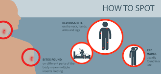 bed bug vs spider bite bed bug bites what you need to know debugged