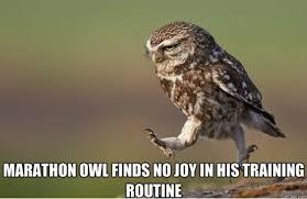 Owl Memes - owl meme viral viral videos