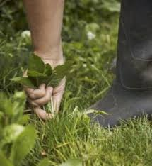 How To Cut Weeds In Backyard How To Remove And Prevent Weeds From Growing In Your Yard Dengarden