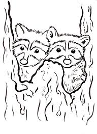 raccoon color page yellowstone vacation pinterest raccoons in