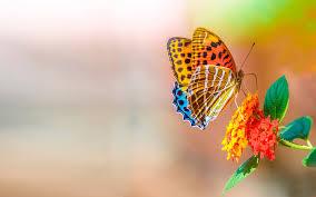 Nice Flowers Colorful Cute Butterfly On Nice Flowers Hd Wallpapers Rocks