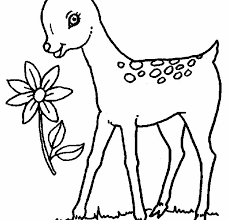lovely baby deer coloring pages 45 additional free coloring