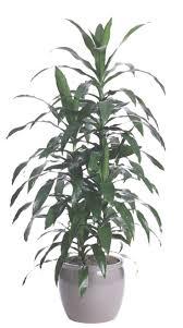 best indoor plants for low light by indoor plants low light common