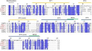 Chp 180 Calcineurin Homologous Proteins Regulate The Membrane Localization