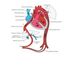 Anatomy Of Female Reproductive System Anatomy Of Female Reproductive Organs