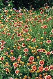 drought tolerant plants southern living