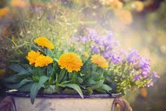 purple flowers stock images 230 851 photos