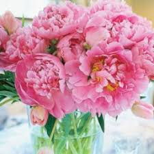 peonies delivery peonies flower delivery in miami miami flowers