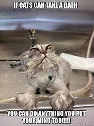 Meme You Can Do It - if cats can take a bath you can do anything you put your mind too