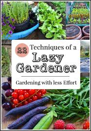 2785 best backyard vegetable and fruit gardening images on