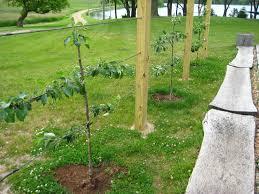 apple trees archives otten bros